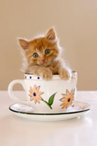 猫の画像でほっこり